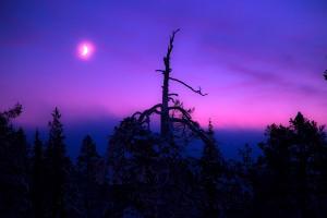 Öinen taivas ja kuu Ylläs2000